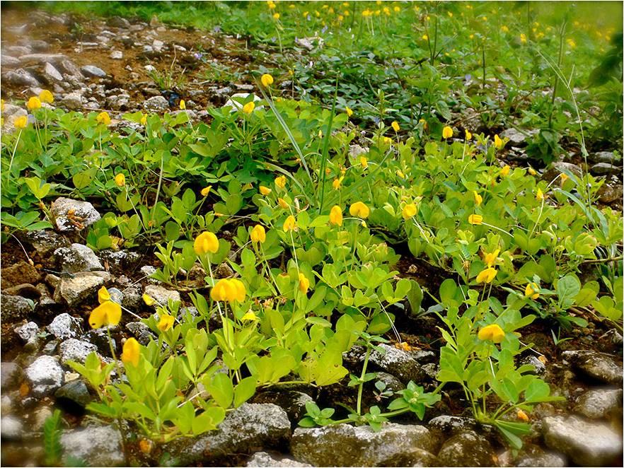 rast rastliny