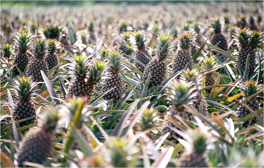 rast rastliny9