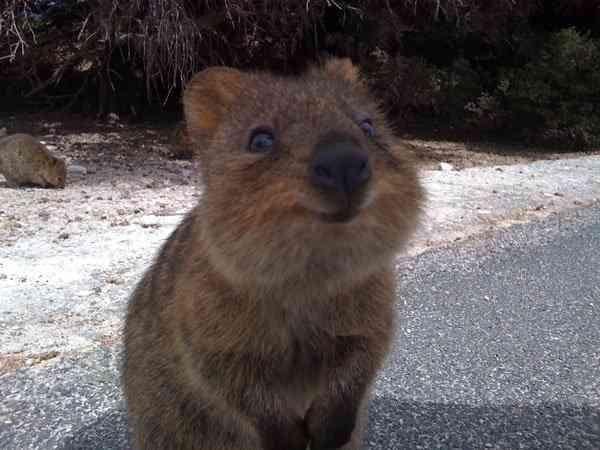 Zoznámte sa s najštastnejším zvieratkom na svete