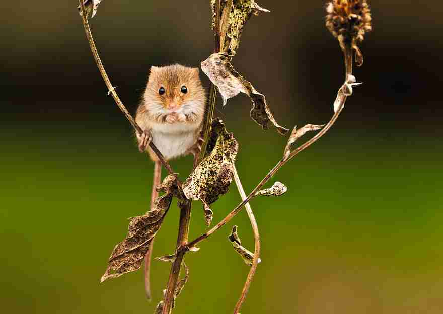 wild-mouse-photography-18