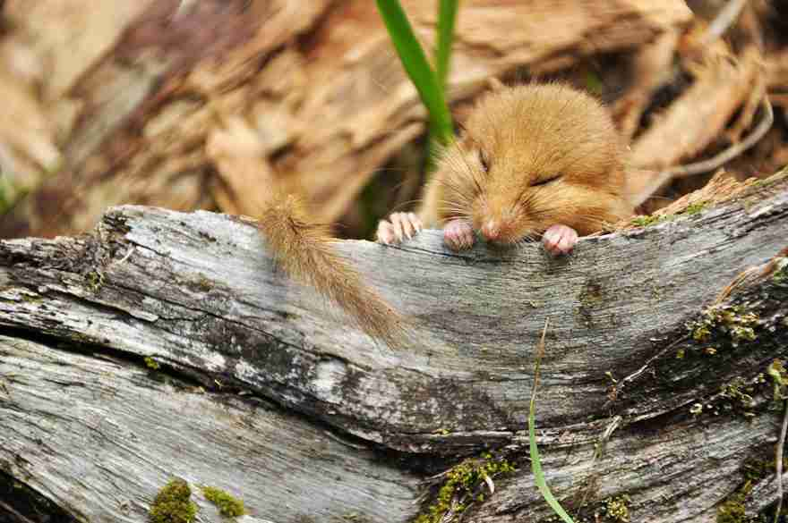 wild-mouse-photography-24
