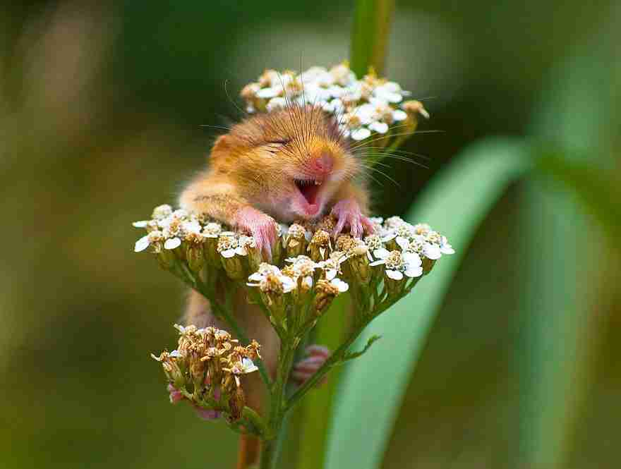 wild-mouse-photography-4