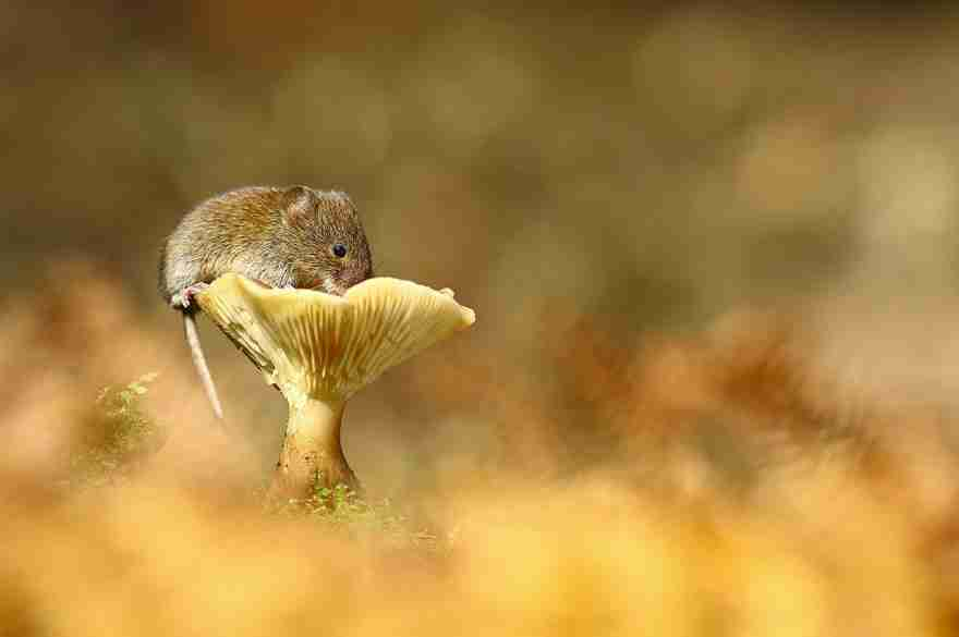 wild-mouse-photography-51