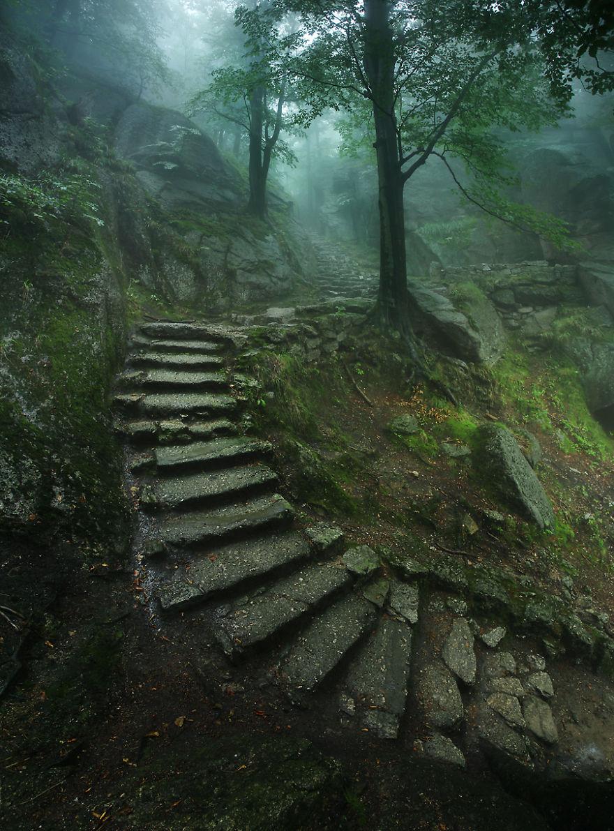 divoká príroda