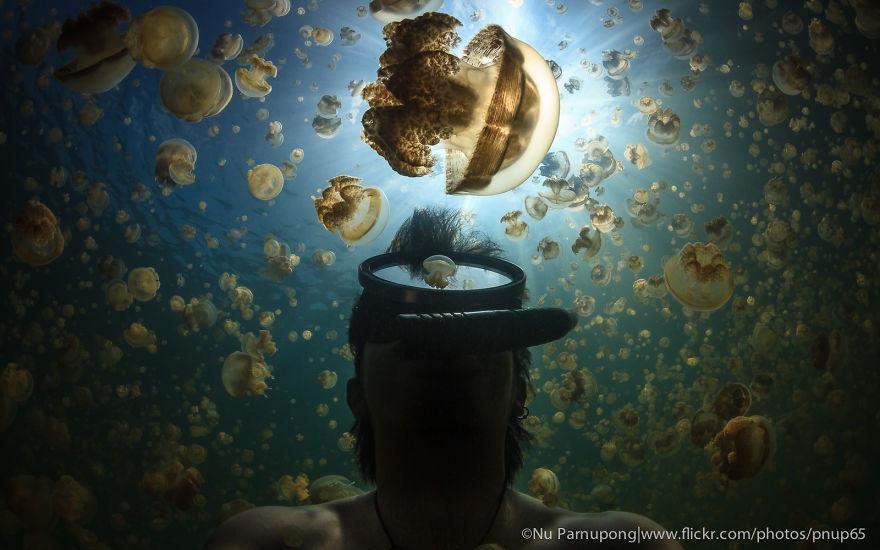 medúzy (1)