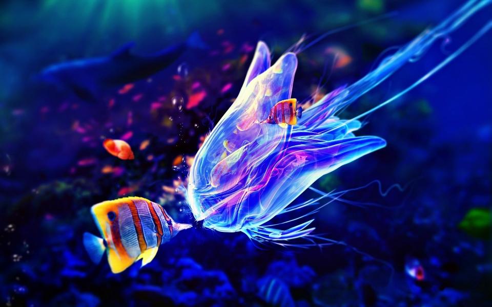 Medúzy – pekné alebo strašidelné vodné stvorenia?