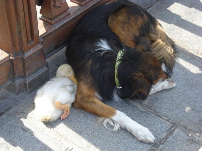 zvieracie kamarátstva