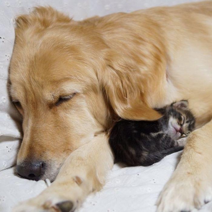 unusual-animal-friendship-53__700