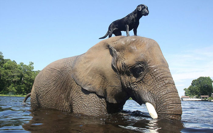 unusual-animal-friendship-55__700