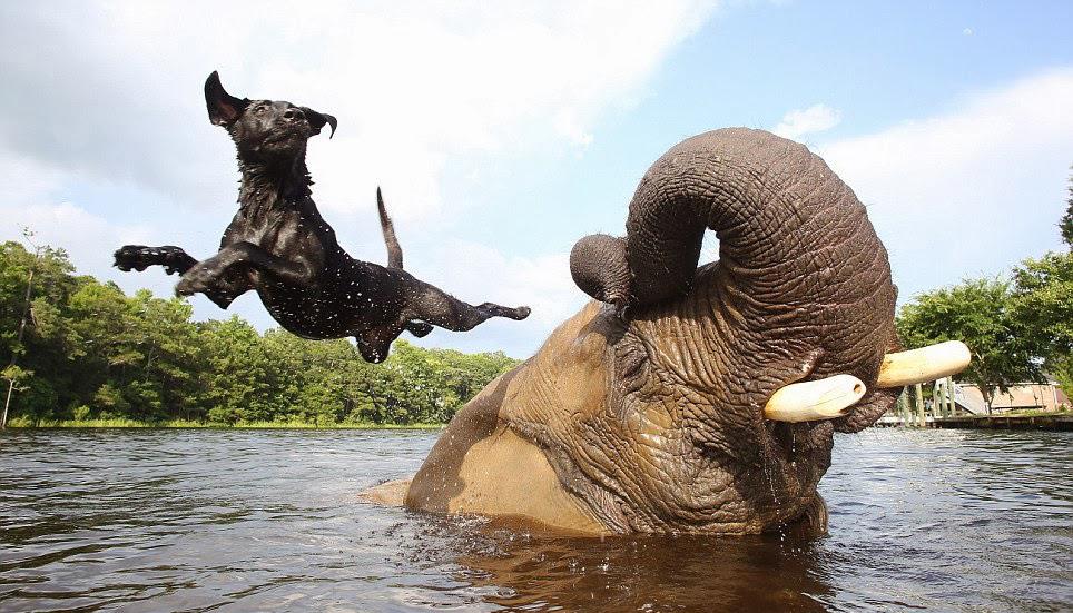 unusual-animal-friendship-57
