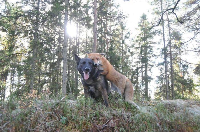 unusual-animal-friendship-58__700