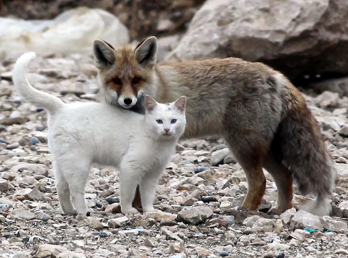 unusual-animal-friendship-68__700