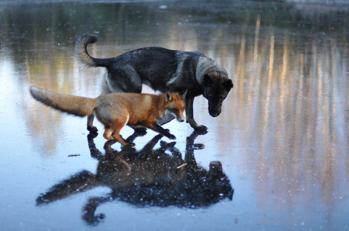unusual-animal-friendship-69