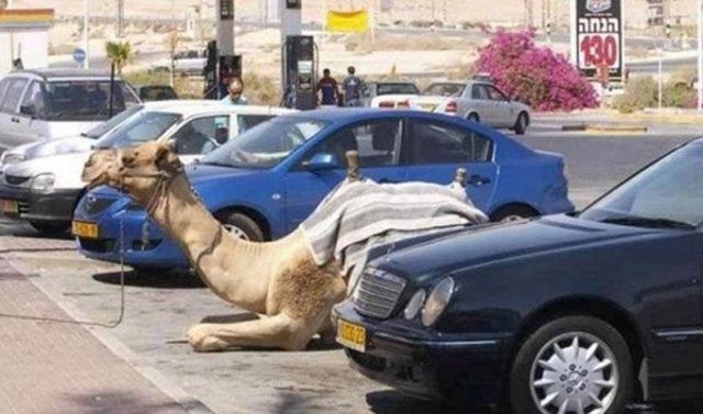 extravagantne-arabske-mesto (31)