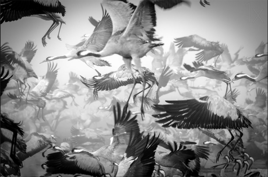 migrujuce-zvierata (17)