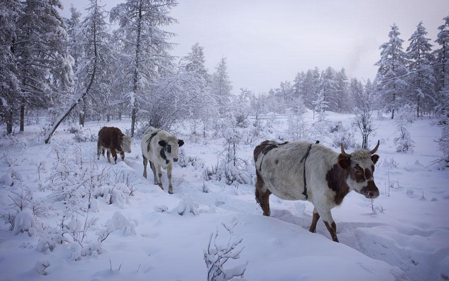 najchladnejšej dediny (12)