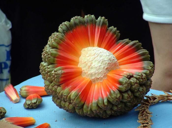 najblaznivejsie-ovocie (19)