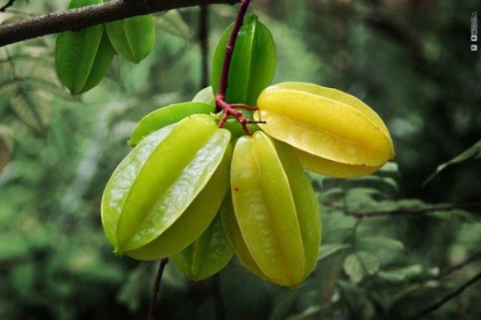 najblaznivejsie-ovocie (20)