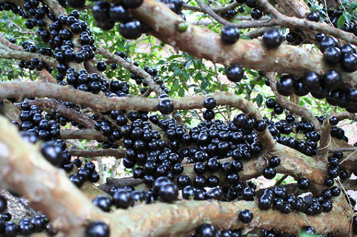 najblaznivejsie-ovocie (4)