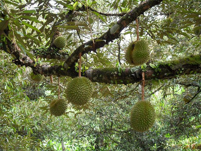 najblaznivejsie-ovocie (7)