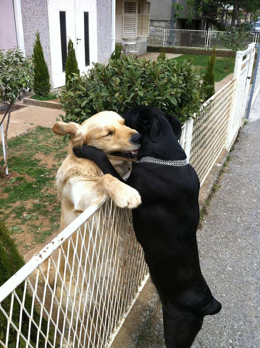 animal-love-friendship-121__880