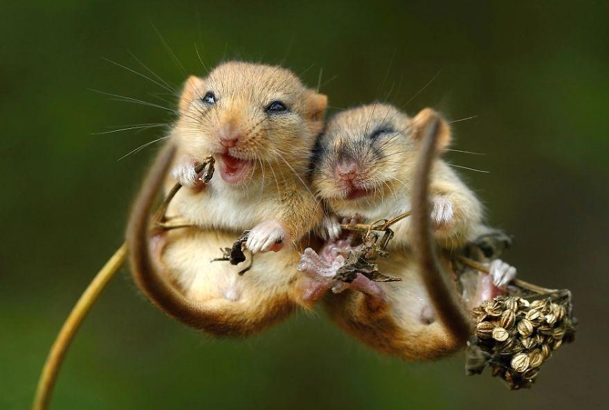 animals-love-couple-7__880