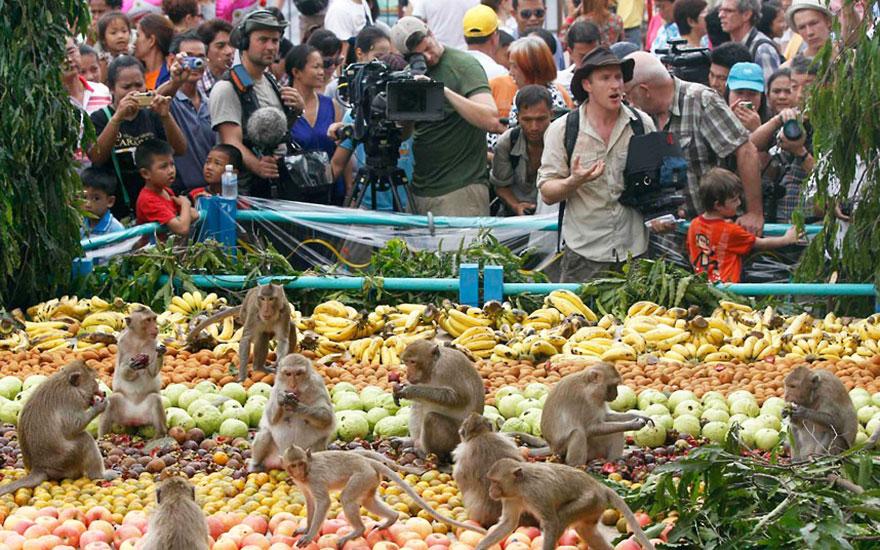 unique-festivals-around-the-world-monkey-buffet-festival-thailand-2