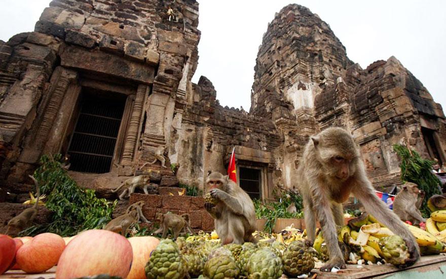 unique-festivals-around-the-world-monkey-buffet-festival-thailand__880