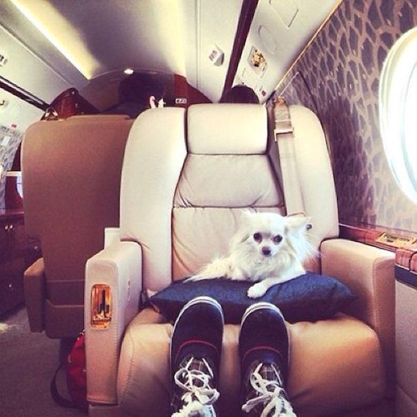 bohate-psiky-instagramu (12)