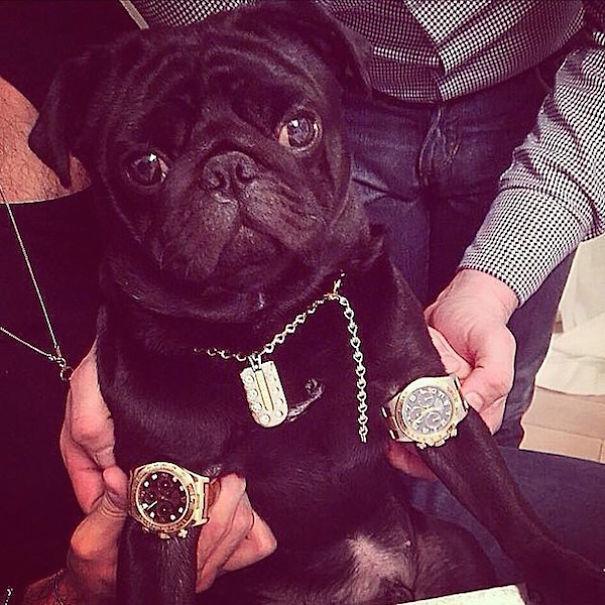 bohate-psiky-instagramu (13)