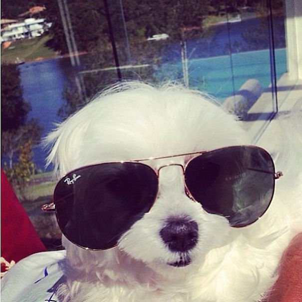 bohate-psiky-instagramu (2)
