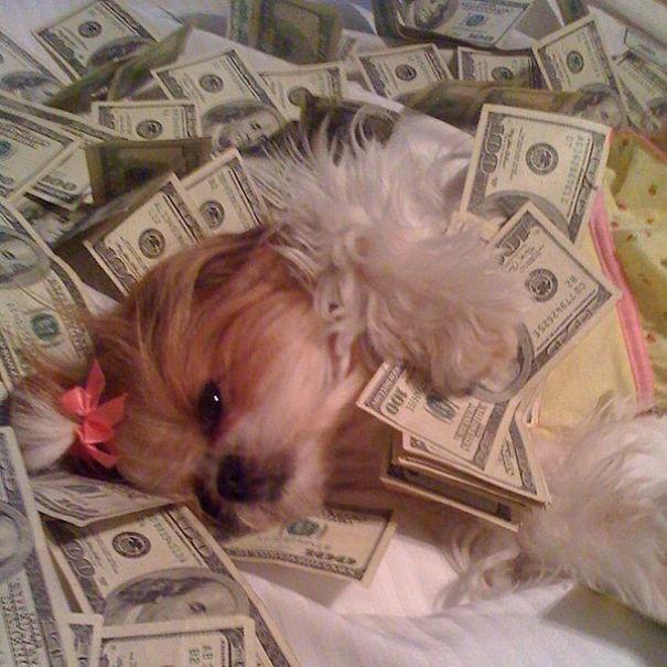 bohaté psíky (22)