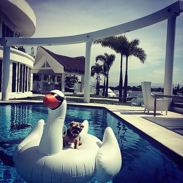 bohaté psíky (23)