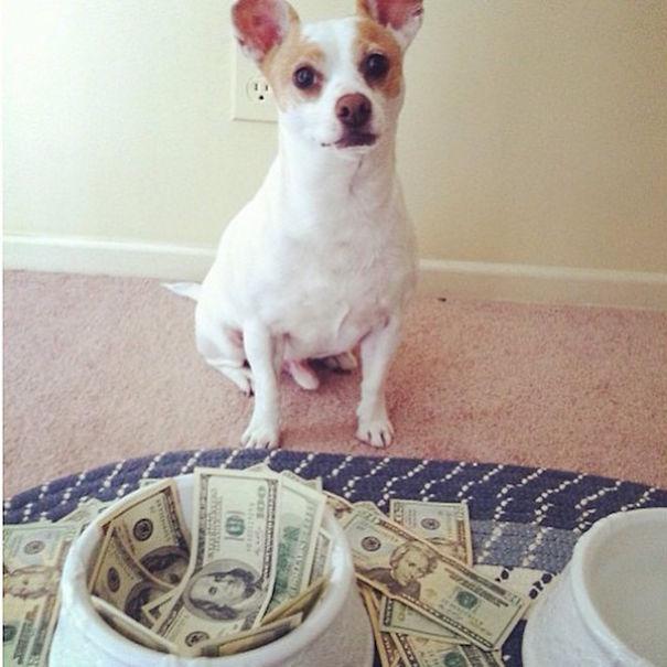 bohate-psiky-instagramu (5)