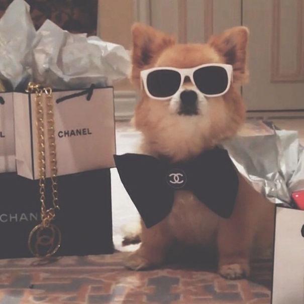 bohate-psiky-instagramu (9)