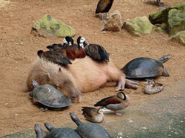 spiaci-zvieraci-kamarati (10)