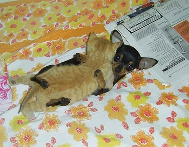 spiaci-zvieraci-kamarati (12)