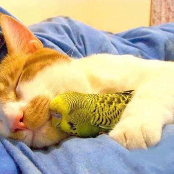 spiaci-zvieraci-kamarati (15)