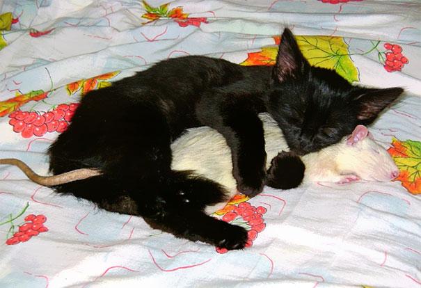 spiaci-zvieraci-kamarati (3)