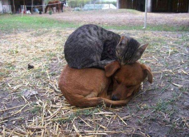 spiaci-zvieraci-kamarati (7)
