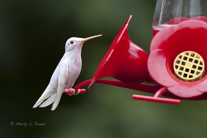 zvierata-albini (11)