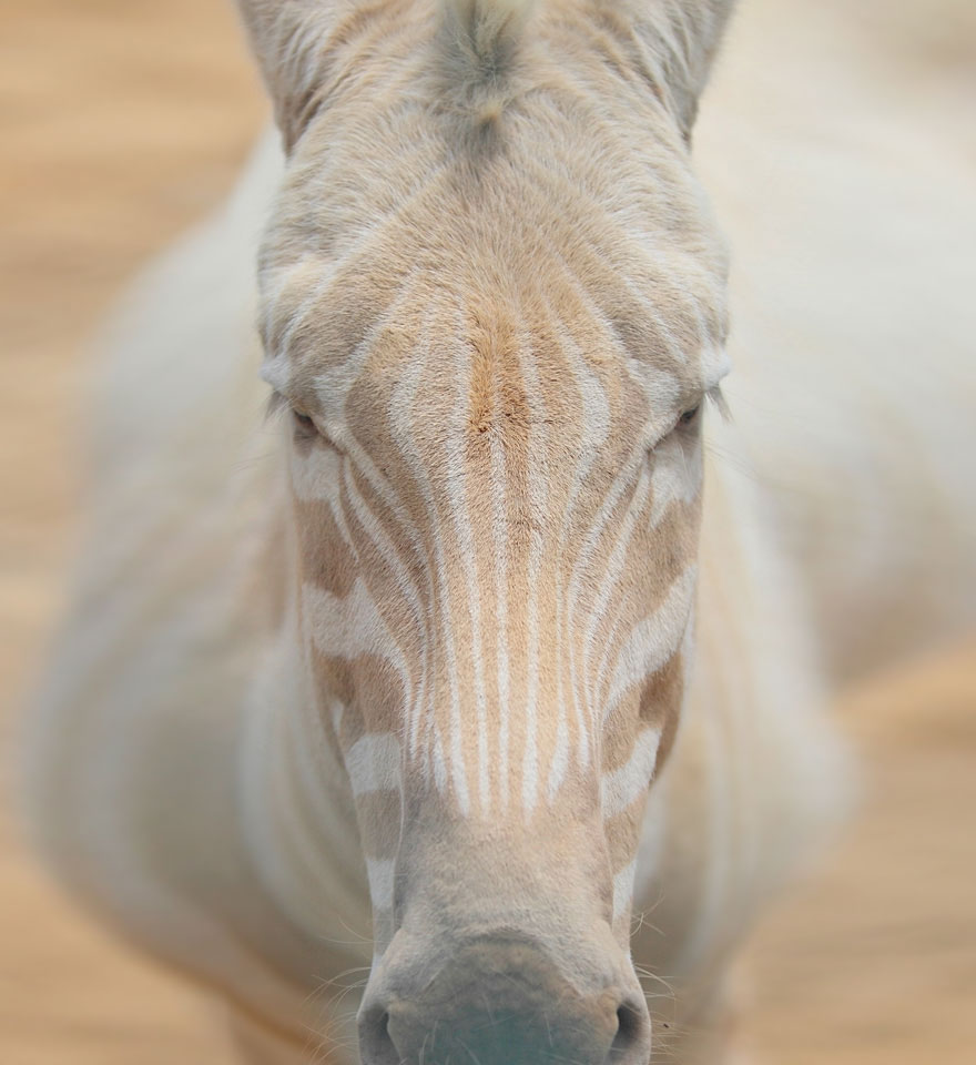 zvierata-albini (18)