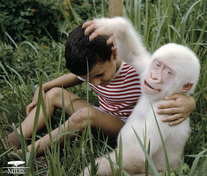 zvierata-albini (6)