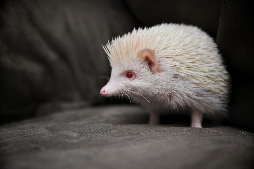 zvierata-albini (7)