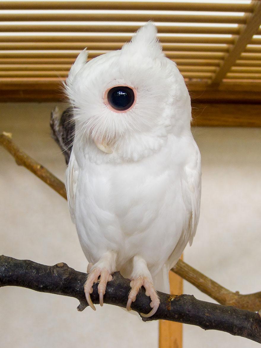 zvieratá albíni (8)