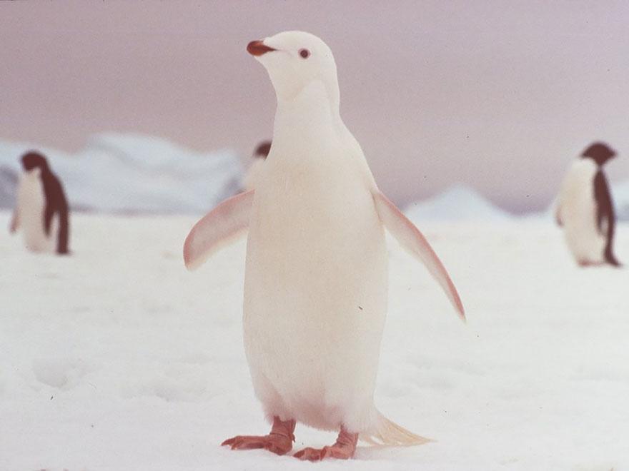 zvierata-albini (9)