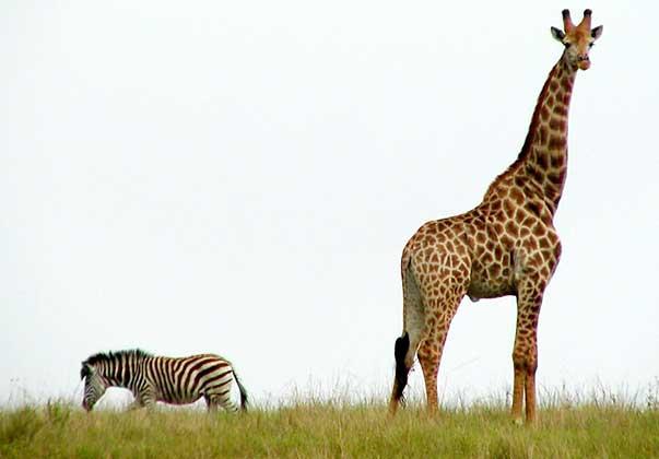 zvierata-priroda-humor (3)