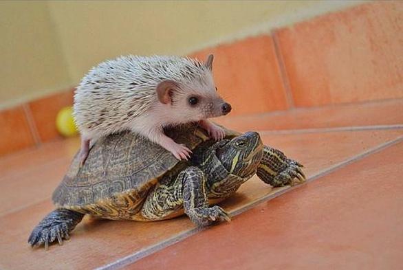 zvierata-priroda-humor (4)
