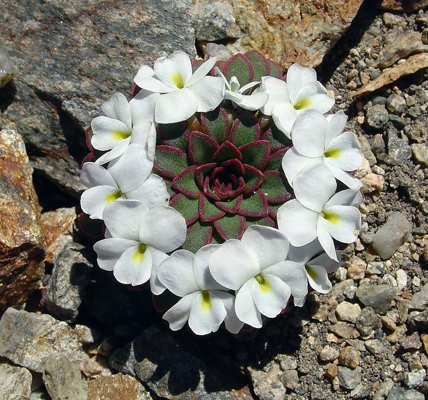 symetrické rastliny (19)