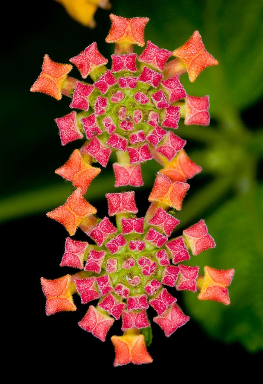 dokonale perfektne fotky kvetov (4)